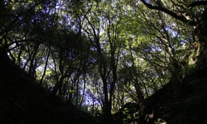 Laurel forest in Madeira. A common ecosystem in southern Europe long before humans evolved, now only found on a few islands in the Atlantic.