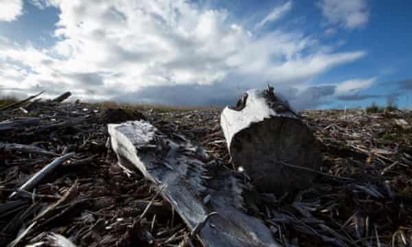 Peatland damaged by inappropriate forestry.