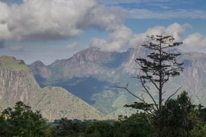A Mulanje cedar stands silhouetted against one of Mount Mulanje's many peaks