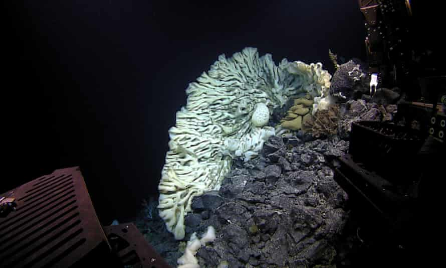 Sponges are similar to coral reefs in that they provide critical habitat for other sea life.