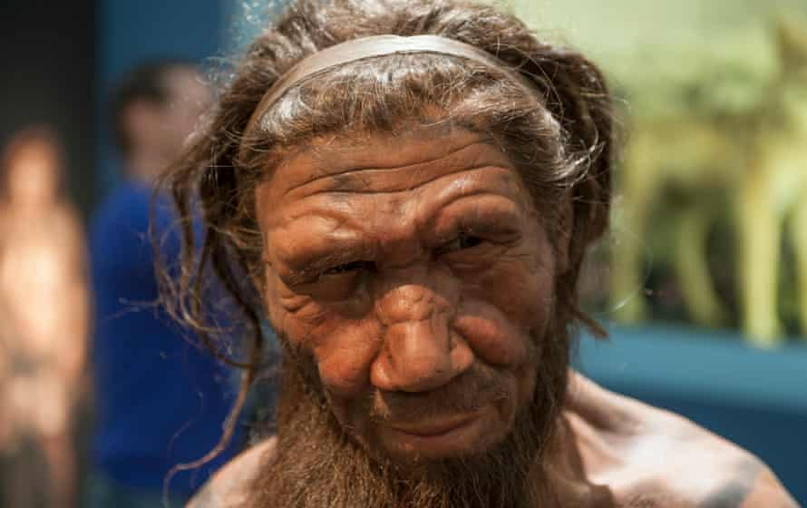 A model of a Neanderthal man at the Natural History Museum in London