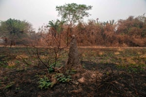 A termite mound near burned vegetation at the Transpantaneira park road in Mato Grosso state, Brazil.