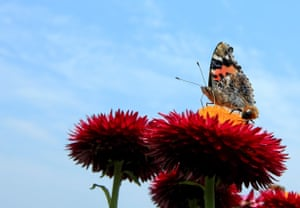 A butterfly sitting on a flower