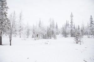 Tundra in northern Siberia.