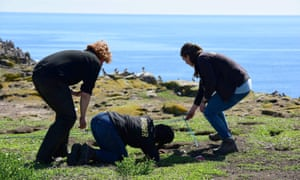 National Trust rangers on the Farne Islands check for puffins in cliftop burrows.