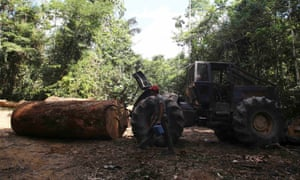 brazil amazon logging
