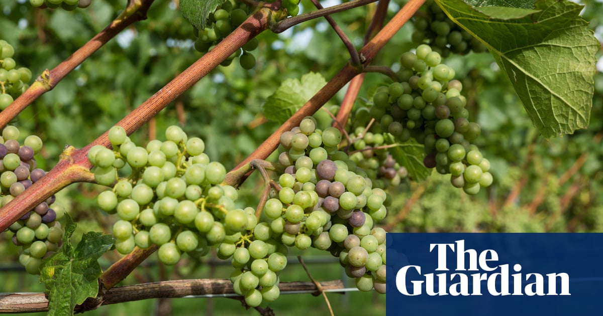 English wine: time to branch out beyond sparkling whites?
