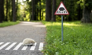 Another report published earlier this year revealed the numbers of hedgehogs in the countryside have halved since the turn of the century.
