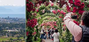 Butchart Gardens and  Mount Douglas lookout.