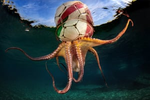 An octopus with a football