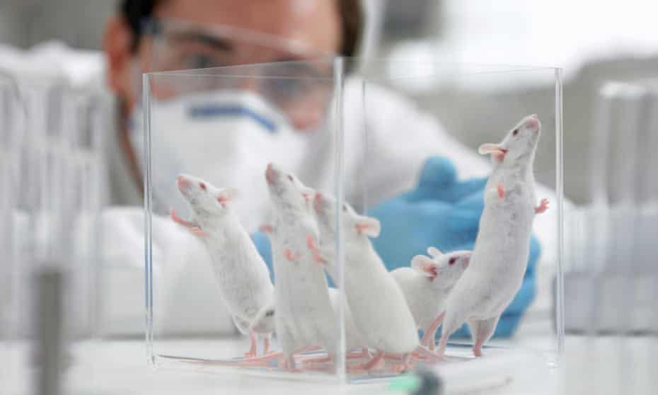Mice in a laboratory