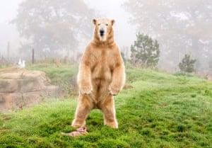 polar bear standing on a grassy bank