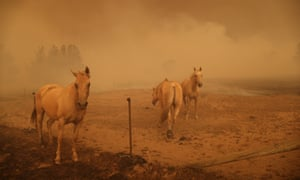 Horses look on as fire impacts Tallabrook Lodge