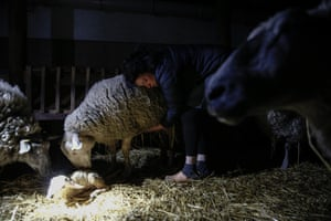 Julie-Lou Dubreuilh takes care of her sheep