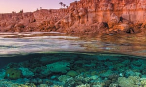 The Red Sea, Egypt, from Reef Life by Callum Roberts.