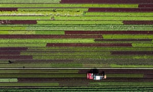 Aerial shot of tractor in field