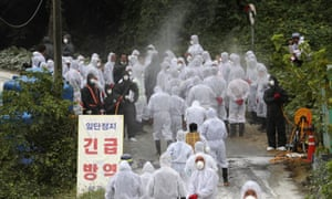 Quarantine officials arrive to slaughter pigs at a farm with a confirmed African swine fever in Paju, South Korea