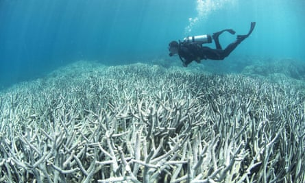 A diver passes over bleached coral on the Great Barrier Reef.