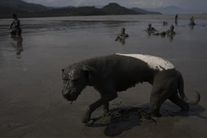 A dog plays in the mud during the traditional bloco da lama carnival party in Paraty.