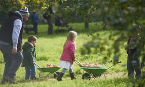 Apple harvesting events welcome the whole family.