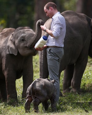 Prince William is patron of Tusk, one of the charities that have linked ivory sales in the UK to the slaughter of 30,000 elephants a year in Africa.