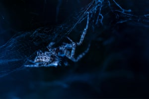 Up close and personal winner: Web of Life, photographed in Spain