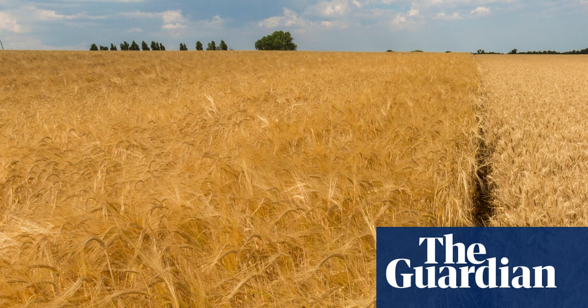 Scientists isolate drought-resistant gene in barley
