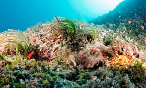 Down in the posidonia roots, a complicated ecosystem of sponges, algae and hydroids supports the larger ecosystem.