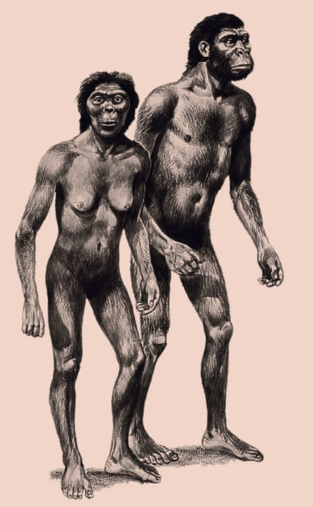 Australopithecines appeared about four million years ago, and had brains about the size of a chimpanzee's.