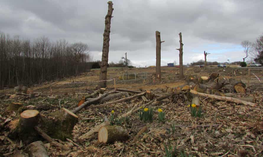 Trees cut down at a woodland in the UK.Just 7% of the country's native woodland is in a good condition.