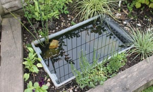 A small pond in a back garden
