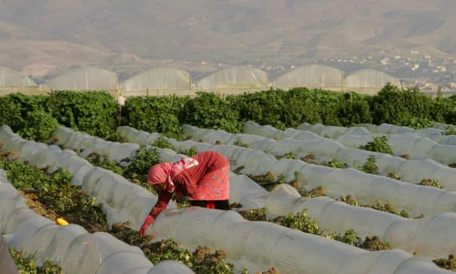 Palestinian female farmer