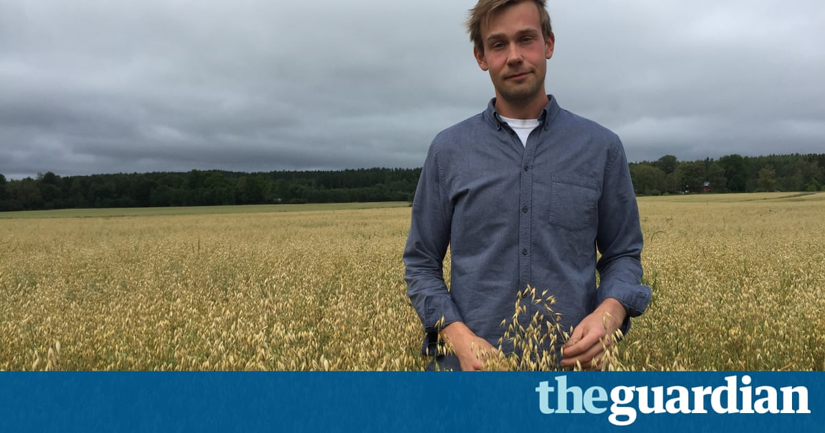 'Wow , no cow': the Swedish farmer using oats to induce milk