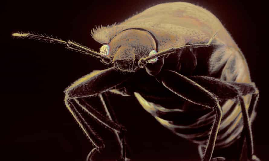 The study found that bedbugs were twice as likely to gather on and inside bags containing soiled clothes compared to those holding clean clothes.
