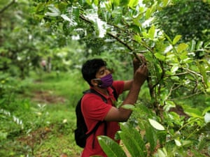 A tree is recorded as part of the tree banking project for farmers in the Indian village of Wayanad, in the southern Indian state of Kerala.