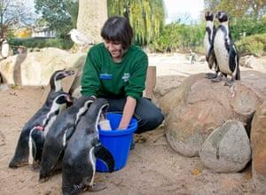 Jane Abreu serves up a meal to the penguins