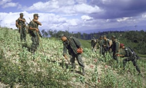 Troops remove poppies from a field in the Philippines