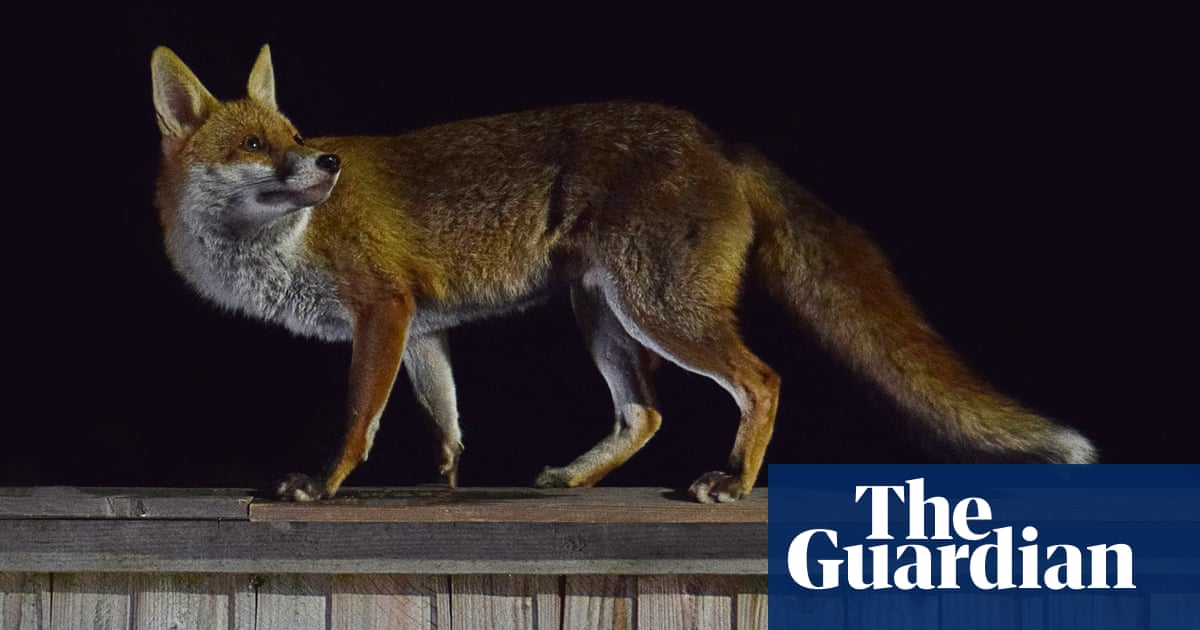 Tim Dowling: is the dog's friendship with the fox sweet – or a bad omen?