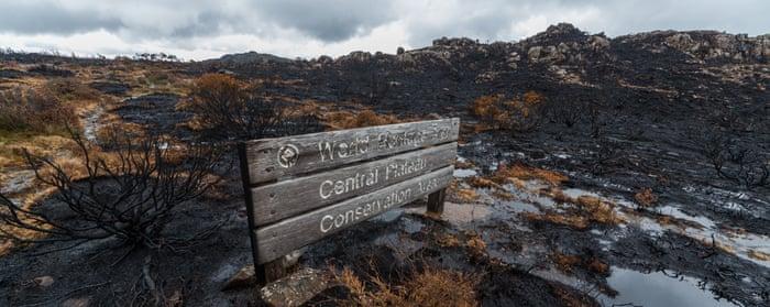 Tasmania S Bushfires A Human Made Calamity On Par With The Razing Of Palmyra S Temples Australia News The Guardian