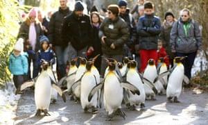 Penguins in Zurich Zoo