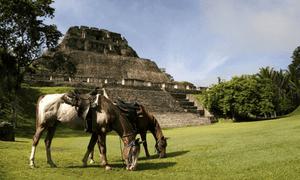 The Unicorn Trails Belize Horseriding trip