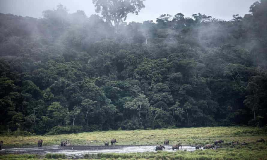 A tropical forest in Ivindo National Park, Gabon on the west coast of Africa.