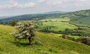 Hawthorn tree in flower with countryside fields, Bryn Arw near Abergavenny, Wales, UK