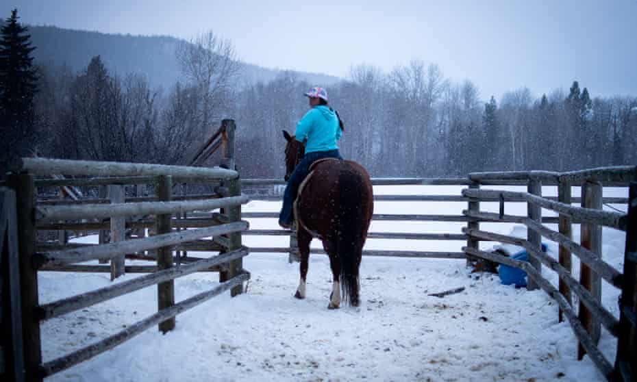 Keira Simonson herds steers that will be used for the University of Montana rodeo team's practice that evening.