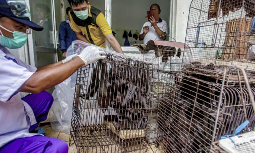 Health officials inspect bats to be confiscated in the wake of a coronavirus outbreak at a live animal market in Solo, Central Java, Indonesia.