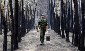 Birch trees damaged by fires in 2010 following one of Russia's hottest summer since records began.