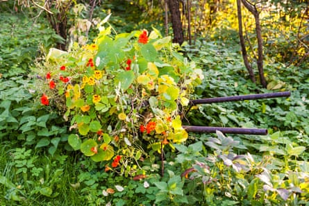 A flowerbed that has been left to overgrow.