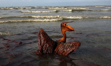 A brown pelican coated in heavy oil after the Deepwater Horizon disaster in 2010