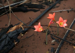 Flowers rise from the ashes of forest fires at La Esperanza ranch, near Chochis, in Bolivia