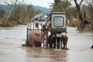 A pig is ferried to safety in Albay province